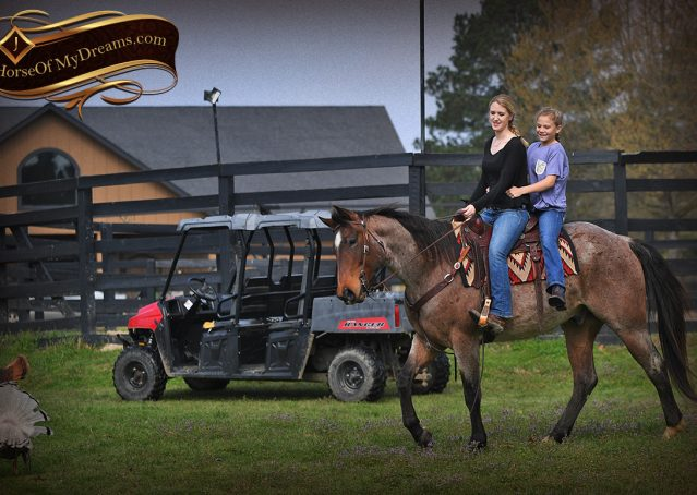 028-Levi-Bay-Roan-Quarter-Horse-For-Sale