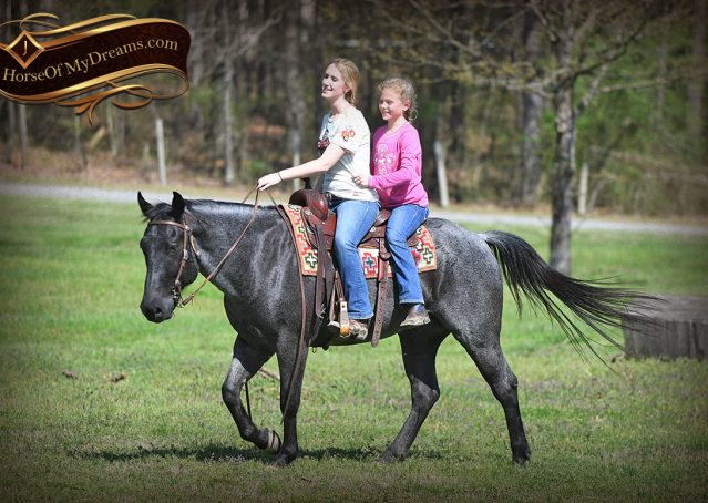 029-Barron-Blue-Roan-Quarter-Horse-Gelding-For-Sale