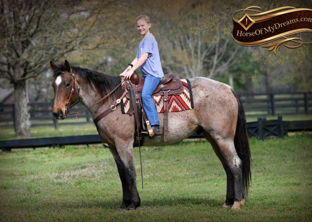 029-Levi-Bay-Roan-Quarter-Horse-For-Sale