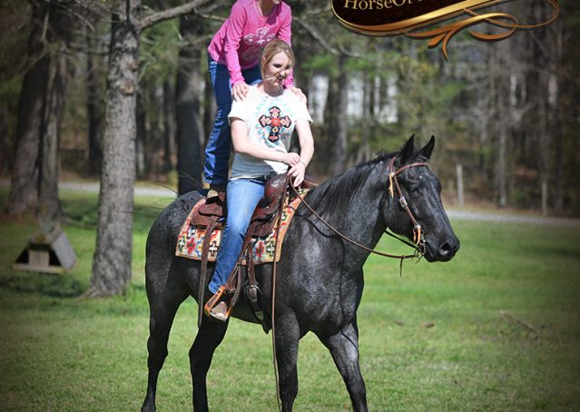 030-Barron-Blue-Roan-Quarter-Horse-Gelding-For-Sale