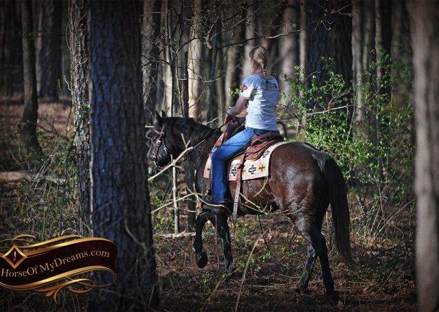 030-Joe2-Black-AQHA-Gelding-For-Sale