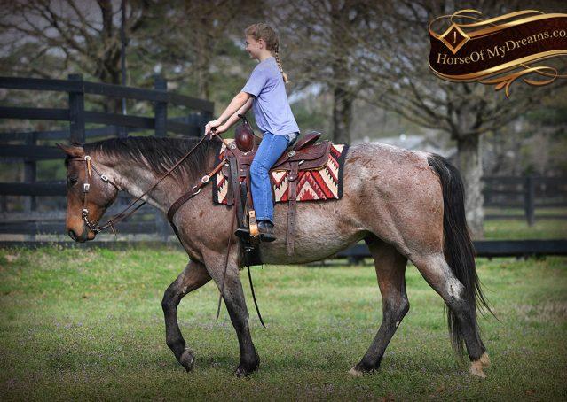 030-Levi-Bay-Roan-Quarter-Horse-For-Sale