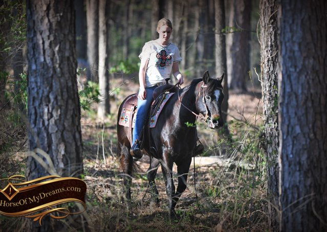 031-Joe2-Black-AQHA-Gelding-For-Sale