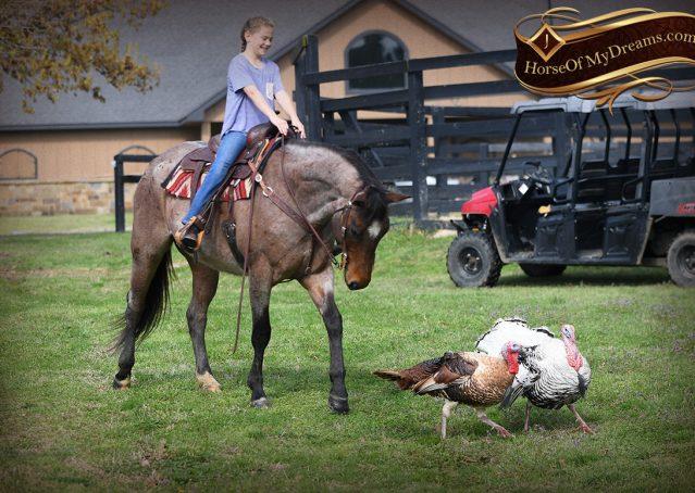 031-Levi-Bay-Roan-Quarter-Horse-For-Sale