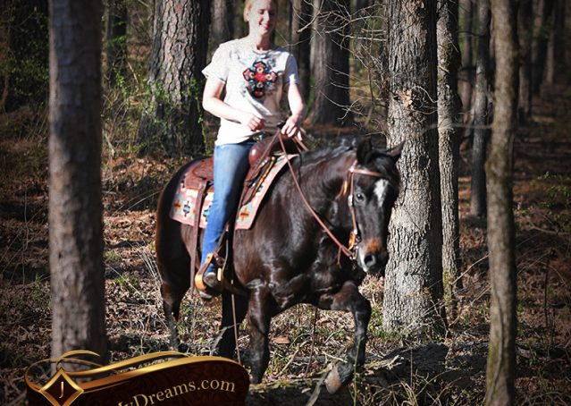 032-Joe2-Black-AQHA-Gelding-For-Sale