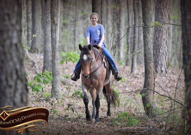 032-Levi-Bay-Roan-Quarter-Horse-For-Sale