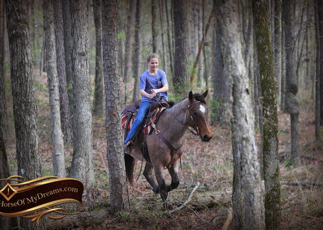 033-Levi-Bay-Roan-Quarter-Horse-For-Sale