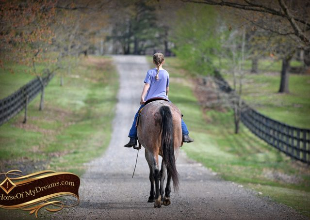 034-Levi-Bay-Roan-Quarter-Horse-For-Sale