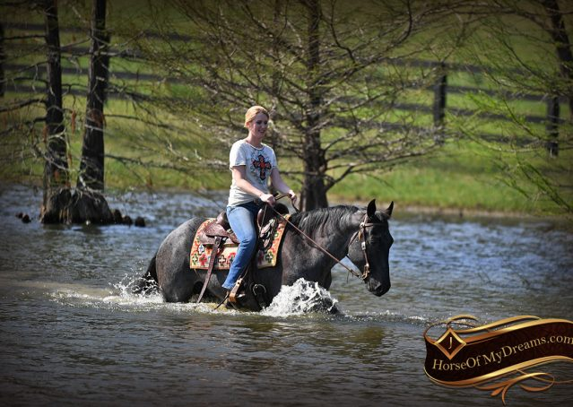 035-Barron-Blue-Roan-Quarter-Horse-Gelding-For-Sale