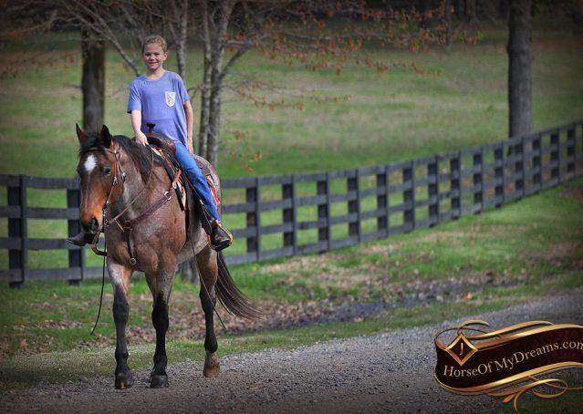 035-Levi-Bay-Roan-Quarter-Horse-For-Sale