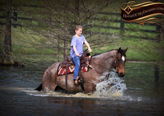 038-Levi-Bay-Roan-Quarter-Horse-For-Sale