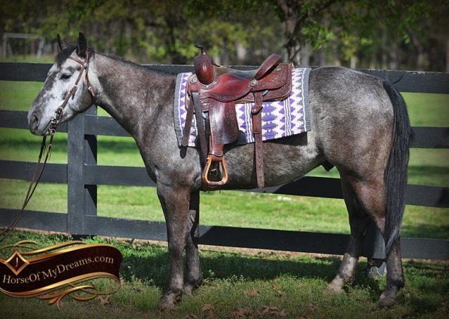 001-Storm-Gray-Quarter-Horse-Gelding-For-Sale