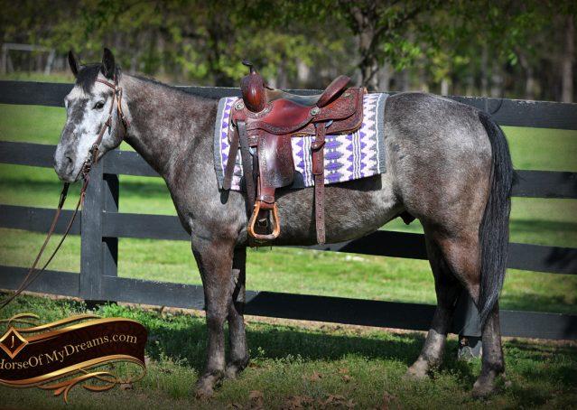 002-Storm-Gray-Quarter-Horse-Gelding-For-Sale