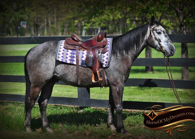 004-Storm-Gray-Quarter-Horse-Gelding-For-Sale