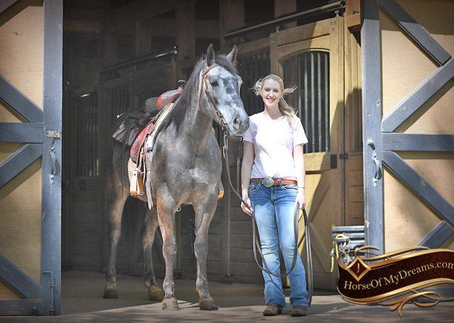 006-Storm-Gray-Quarter-Horse-Gelding-For-Sale
