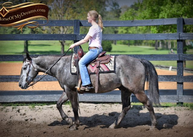 007-Storm-Gray-Quarter-Horse-Gelding-For-Sale