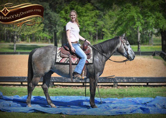 009-Storm-Gray-Quarter-Horse-Gelding-For-Sale