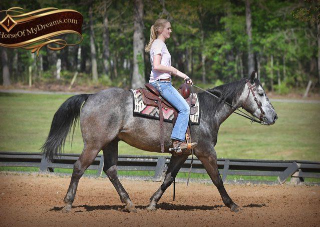 011-Storm-Gray-Quarter-Horse-Gelding-For-Sale