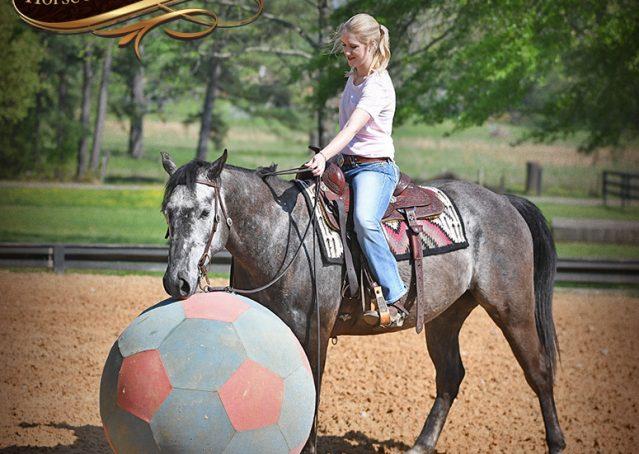 012-Storm-Gray-Quarter-Horse-Gelding-For-Sale