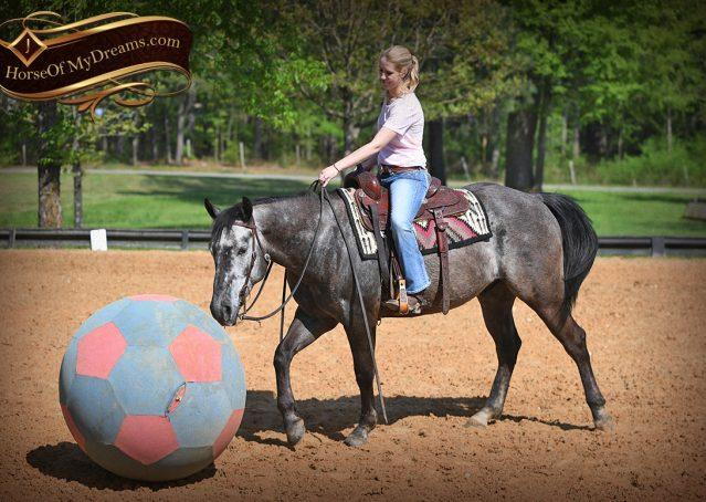 013-Storm-Gray-Quarter-Horse-Gelding-For-Sale