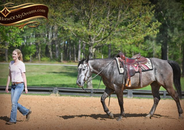 016-Storm-Gray-Quarter-Horse-Gelding-For-Sale