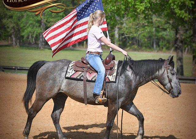 019-Storm-Gray-Quarter-Horse-Gelding-For-Sale