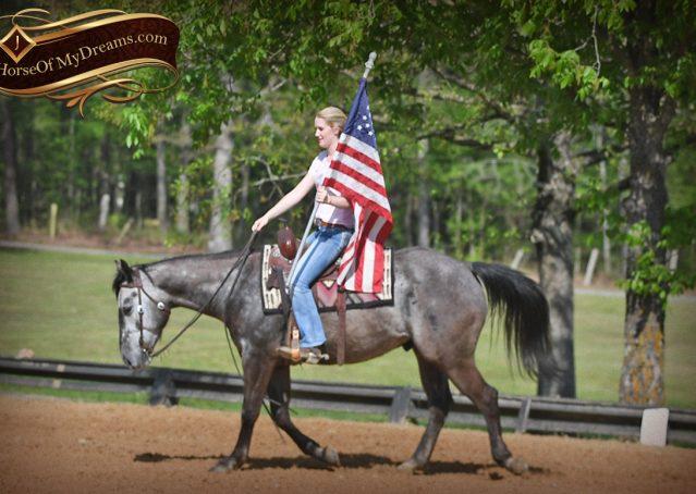 020-Storm-Gray-Quarter-Horse-Gelding-For-Sale
