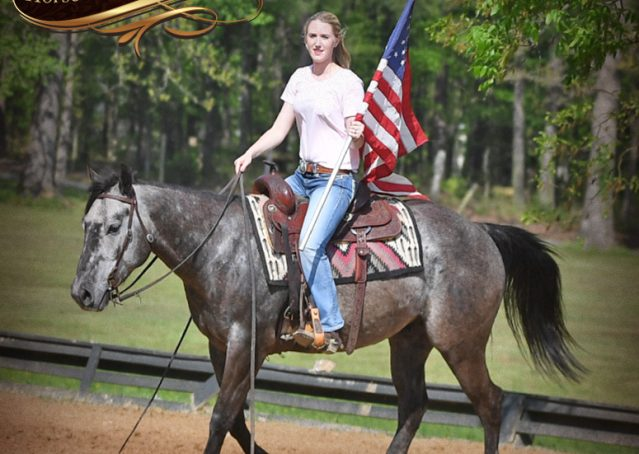 021-Storm-Gray-Quarter-Horse-Gelding-For-Sale