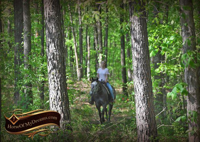 022-Storm-Gray-Quarter-Horse-Gelding-For-Sale