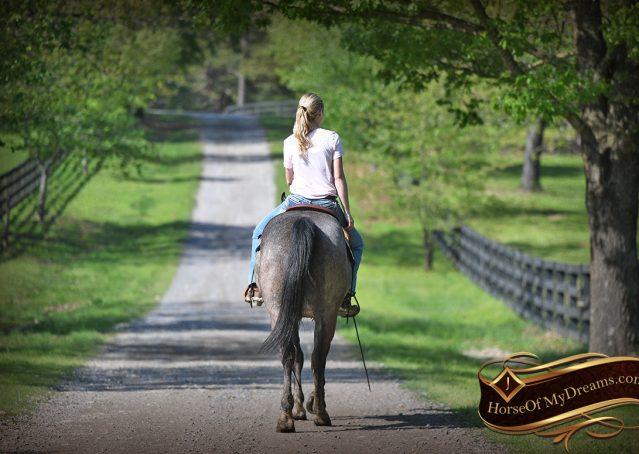 024-Storm-Gray-Quarter-Horse-Gelding-For-Sale