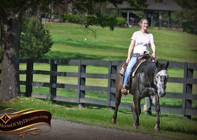 025-Storm-Gray-Quarter-Horse-Gelding-For-Sale
