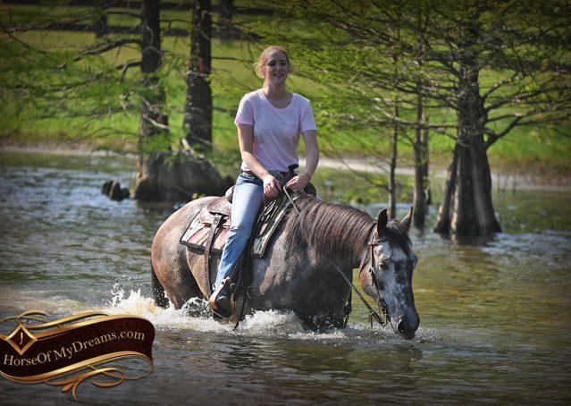 029-Storm-Gray-Quarter-Horse-Gelding-For-Sale