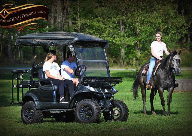 030-Storm-Gray-Quarter-Horse-Gelding-For-Sale