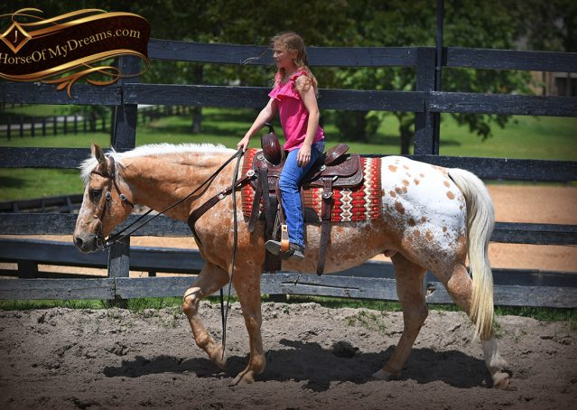 006-Regis-Palomino-Appaloosa-Gelding-For-Sale