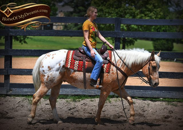 007-Regis-Palomino-Appaloosa-Gelding-For-Sale