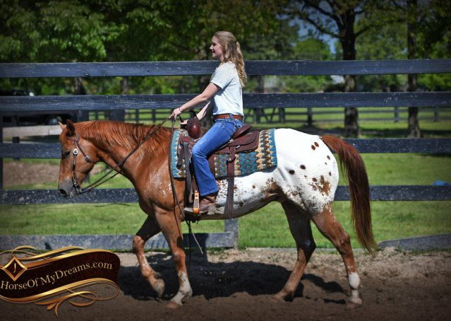 008-Sid-Appaloosa-gelding-for-sale