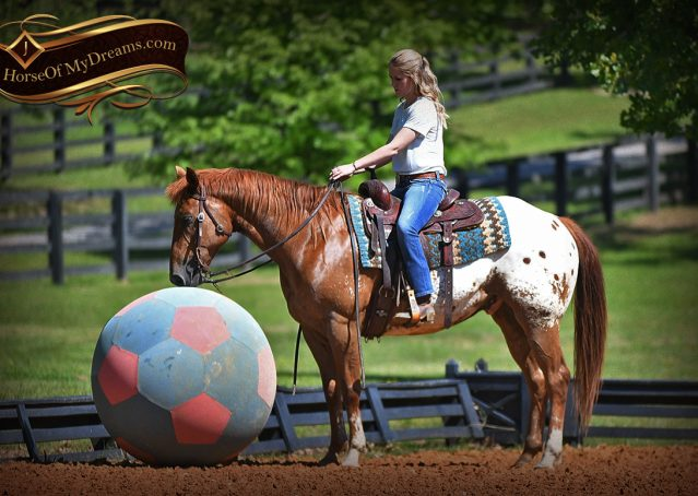 009-Sid-Appaloosa-gelding-for-sale