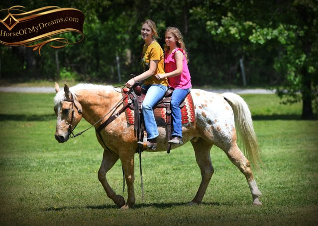 010-Regis-Palomino-Appaloosa-Gelding-For-Sale