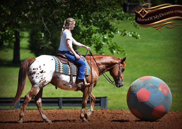 010-Sid-Appaloosa-gelding-for-sale