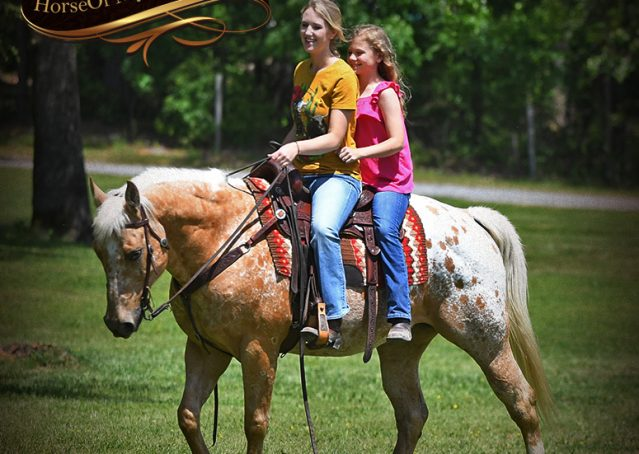 011-Regis-Palomino-Appaloosa-Gelding-For-Sale