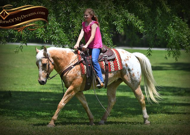 012-Regis-Palomino-Appaloosa-Gelding-For-Sale