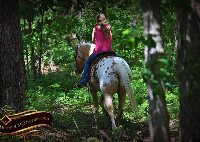 014-Regis-Palomino-Appaloosa-Gelding-For-Sale