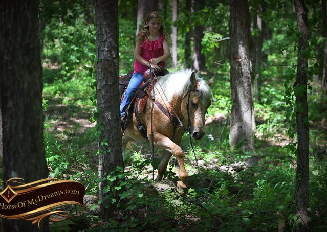 015-Regis-Palomino-Appaloosa-Gelding-For-Sale