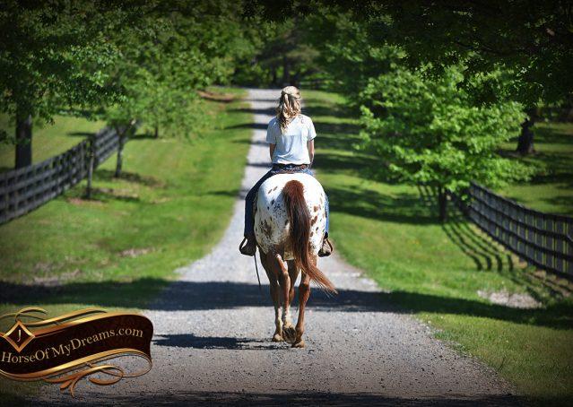018-Sid-Appaloosa-gelding-for-sale