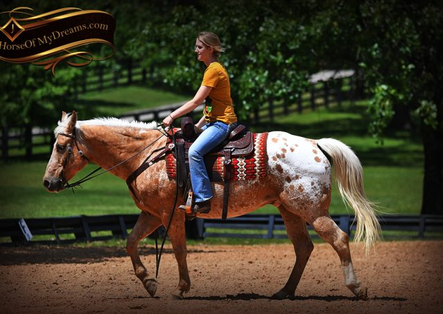 020-Regis-Palomino-Appaloosa-Gelding-For-Sale