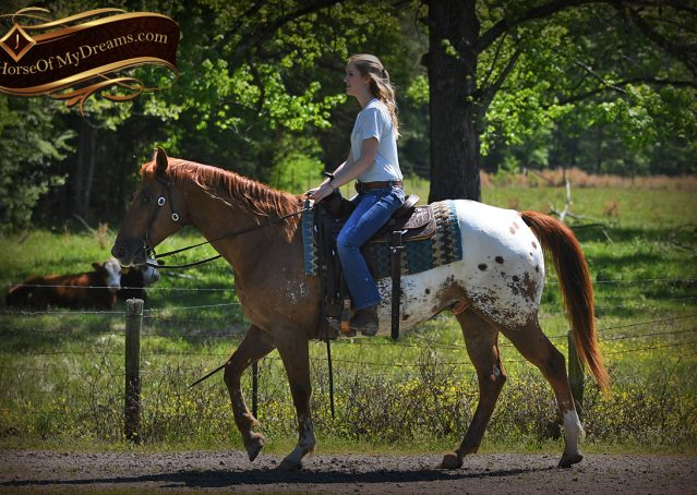 021-Sid-Appaloosa-gelding-for-sale
