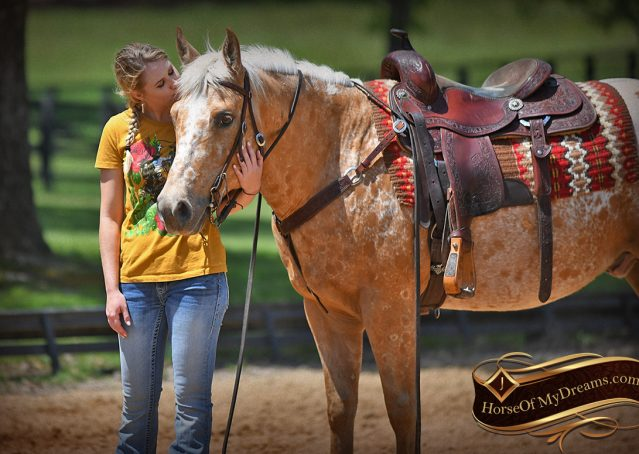 025-Regis-Palomino-Appaloosa-Gelding-For-Sale