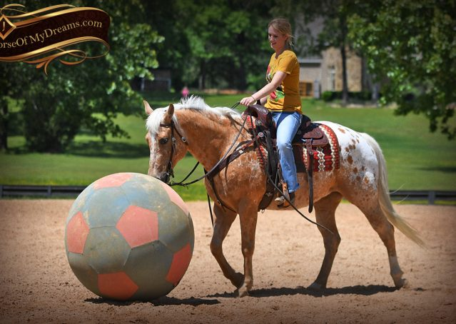 027-Regis-Palomino-Appaloosa-Gelding-For-Sale