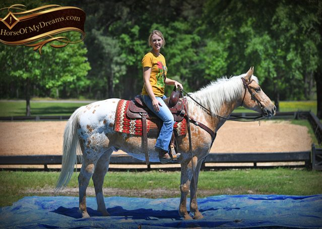 028-Regis-Palomino-Appaloosa-Gelding-For-Sale