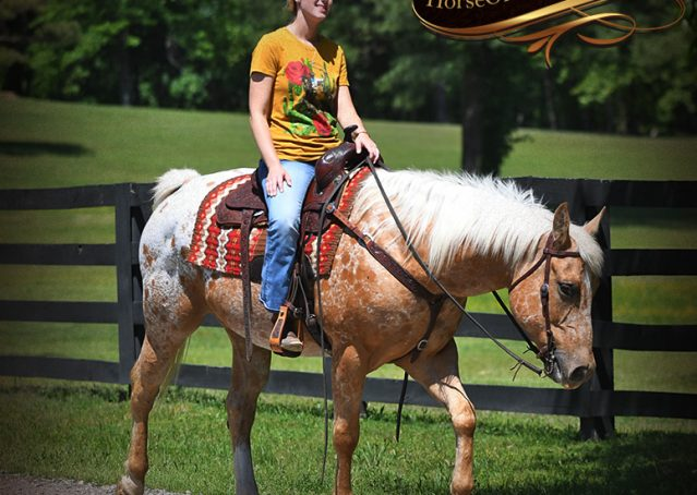 031-Regis-Palomino-Appaloosa-Gelding-For-Sale